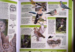 Světem-šumavské-přírody-ptáci-300x209